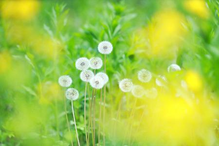 봄 날(2)