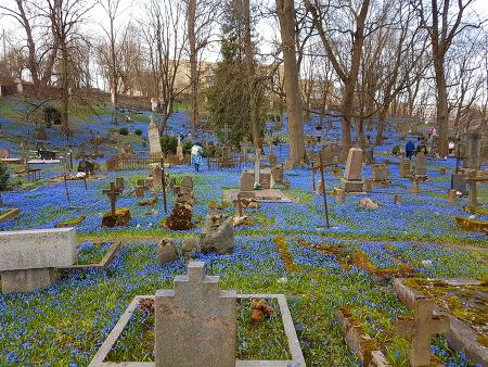 잿빛 묘지에 하늘 파란색이 피어나다