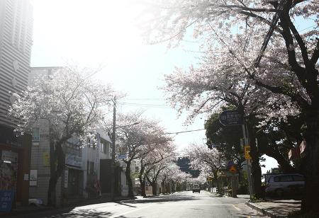 빛나는 봄날.jpg