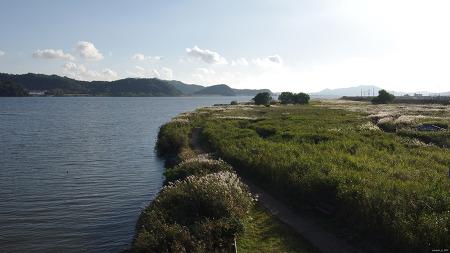 신성리 갈대밭 (2021갈) 충남 서천군 한산면 신성리 (금강변)