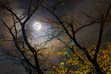 """""""아기는 추석(秋夕)을 맞이하여 보름달을 바라보며 소원을 빌어야 한다."""""""