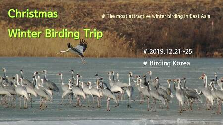 [Winter] Intensive Winter Birding Trip in South Korea (7 day)