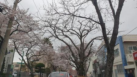 [제주여행 2박3일] 3월 제주길에 봄이 왔다