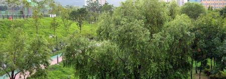 수원 호매실동 자연쉼터를 찾는다면! 가을 산책하기 좋은 물향기 공원