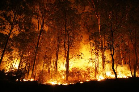 인공 조림에서 자연 복원으로, 산불 피해 복원의 새로운 패러다임을 제시하다