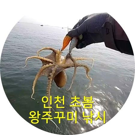인천 연안부두 봄 주꾸미낚시 0321