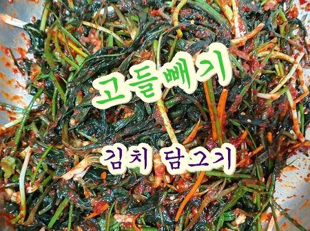 가을의 입맛을 돋구어주는 시골반찬 고들빼기 김치 담그기.