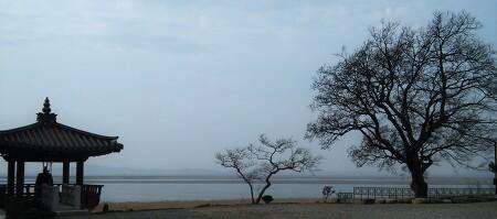 망해사(望海寺)와 팽나무