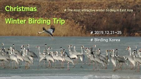[Special Trip] Christmas Winter Birding Trip in South Korea (5 day, 2019.12.21~25)
