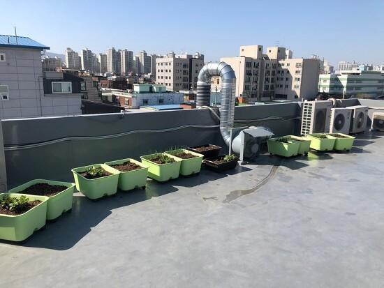 옥상 채소정원 프로젝트