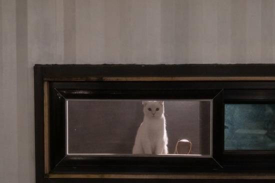 양산 한시십오분 카페. 고양이 일상 스냅샷입니다.