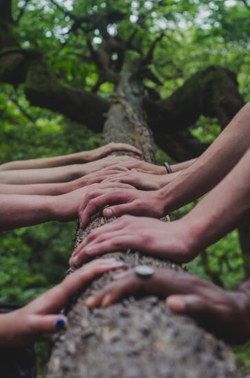 고독하고 의연한 나무들