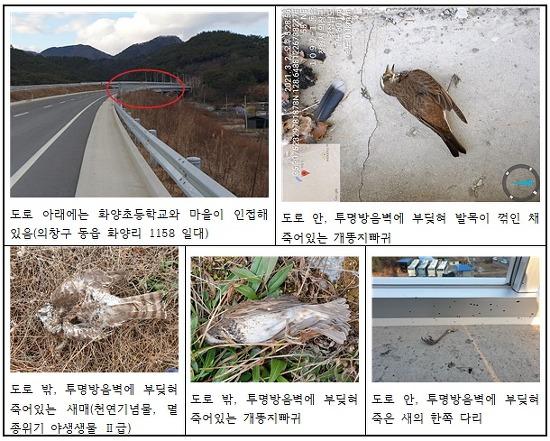 새들의 무덤이 되고 있는 창원 의창구 동읍~봉강 국지도 30호선 건설 현장, 모든 생명은 귀하고 존중 받아야 한다!