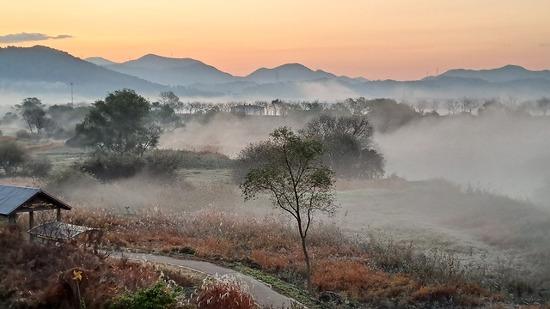 새벽에 습지를 걷다-김해 화포천