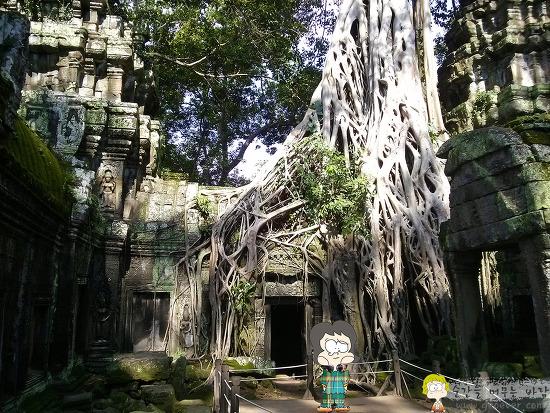 캄보디아, 앙코르 유적 - 타 프롬(Ta Prohm)