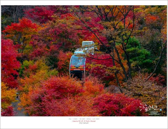 짧은 가을이 아쉬움이 남는 화담숲