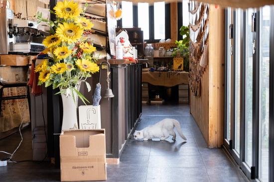 양산카페 / 부산근교카페추천 / 한시십오분-고양이가족이 기다리는 힐링코스