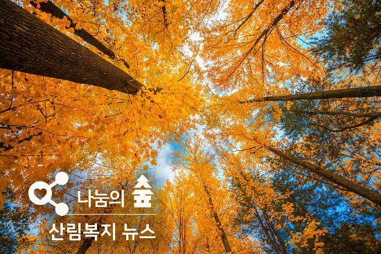 산림복지 뉴스