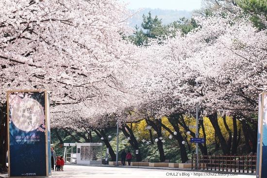 렛츠런파크(경마공원) 벚꽃축제 다녀왔어요 ~