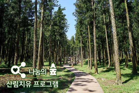 나눔의 숲 산림치유 프로그램