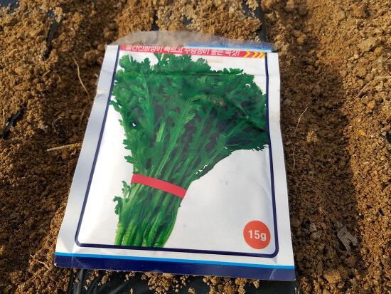 쑥갓 재배방법(파종,발아,수확시기)