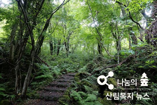 나눔의 숲 산림복지 뉴스