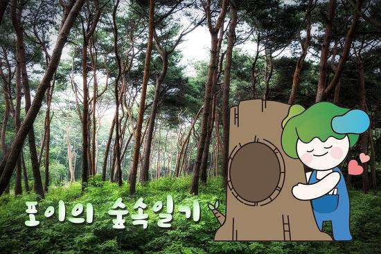 포이의 숲속일기