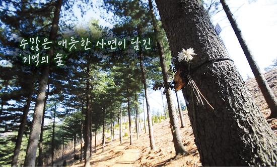 수많은 애틋한 사연이 담긴 '기억의 숲'