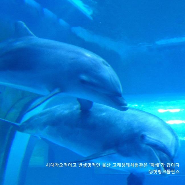 """'돌고래 잡는 고래생태체험관' 울산서 8마리째 폐사···""""폐쇄만이 답"""""""