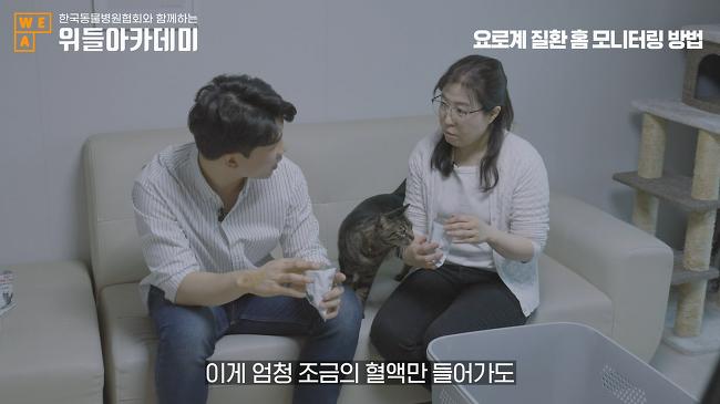 위들아카데미, 고양이 요로계 질환 라이브 방송..
