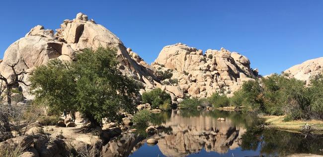 Joshua Tree National Park California 조슈아 트리 국립 공원 미국 서부 여행
