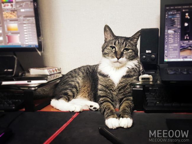 웹툰 공모전을 준비하는 동안 고양이들은