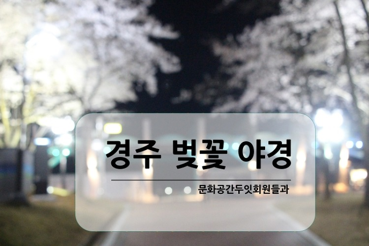 경주 보문단지 벚꽃터널 야경. 늦은 밤의 돌발..