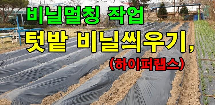 나홀로 텃밭 비닐씌우기,비닐멀칭 작업, 하이퍼랩스 (feat.에세이)