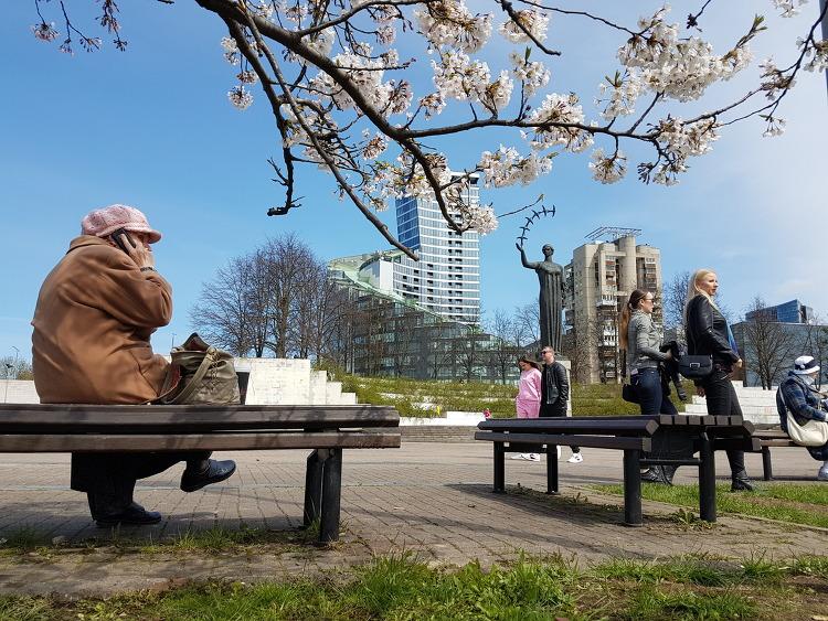 개나리꽃과 벚꽃이 이제 완연한 봄날을 재촉해