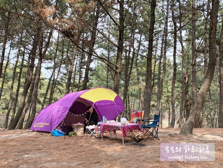 [충청도 캠핑] 태안 석갱이 소나무 야영장에서 해변 캠핑을~~