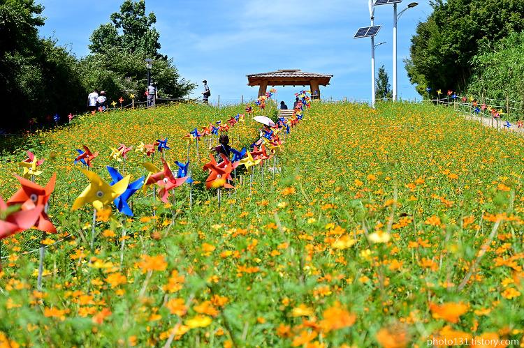올림픽공원 풍경, 노랑코스모스와 핑크뮬리