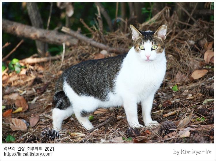 [적묘의 고양이]송정, 고양이가 있는 풍경, 바다, 송정해수욕장,죽도공원,윈드서핑