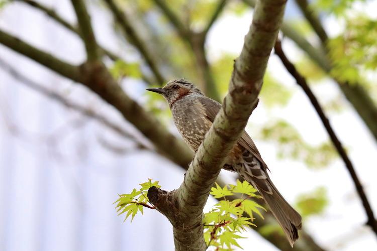 4월의 새
