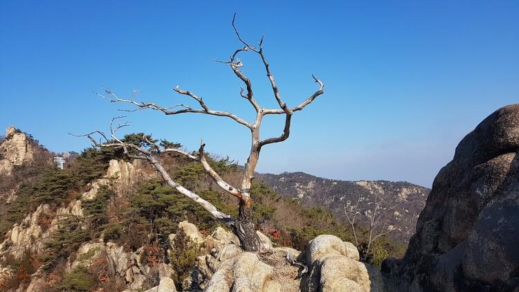 [일요산행] 관악산 200112