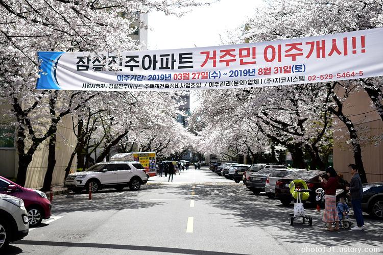 잠실 진주아파트 벚꽃 만개, 4월 7일 풍경