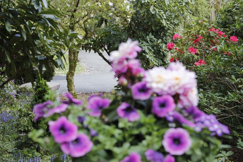 앞뜰과 뒷뜰ㅡ 봄, 꽃, 색, 빛