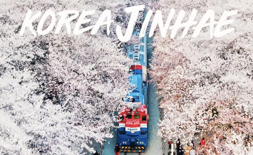 드론 사진! 진해 벚꽃 & 스카이픽셀 메인노출