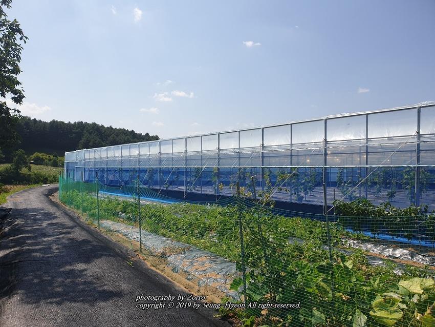 칠월의 농촌 풍경