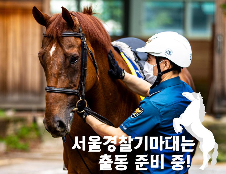 서울경찰기마대는 출동 준비 중!