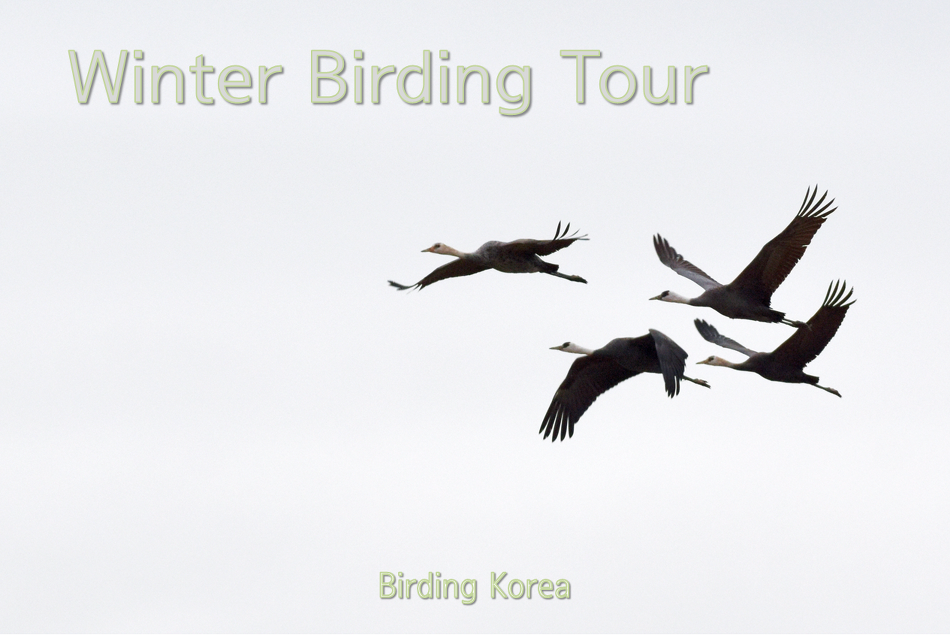 2020~2021 Winter Birding Tour