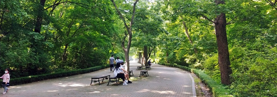 전나무 숲길 그늘에서 시원한 여름을 보낼 수 있는, 포천 가볼 만한 곳 '포천 국립수목원'