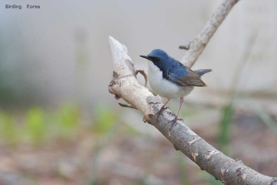 우리나라의 새, 봄