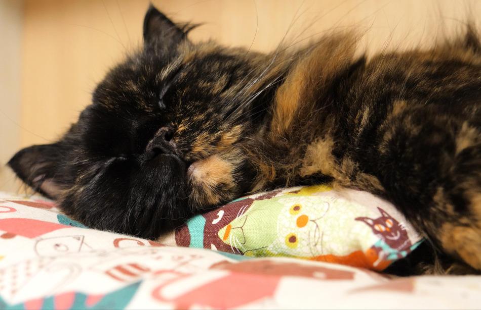 잠 잘 때 슈퍼냥이 되는 고양이