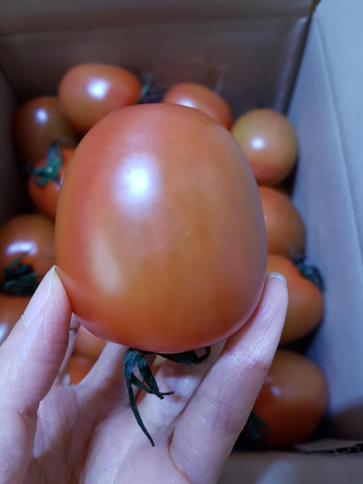에그 토마토?? 맘에 들어~^^